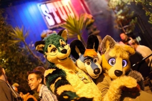 furries-stud